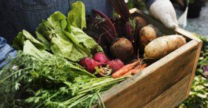 Farmers Market on Bainbridge Island